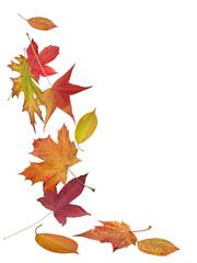 chute de feuilles mortes
