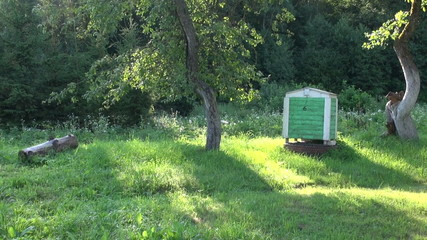 beautiful summer morning in old farm garden and beehive