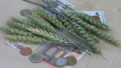 agriculture business concept – euro banknotes and wheat ears