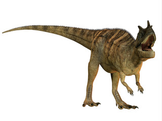 Ceratosaurus on White