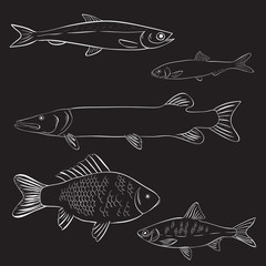 Hand drawn river fish on black background. Vector illustration