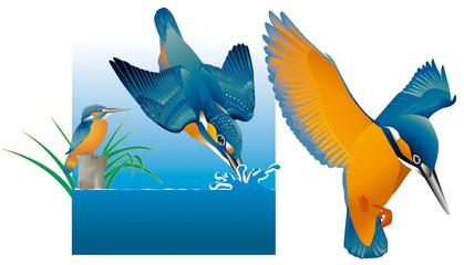 Oiseaux - Martin-pêcheur