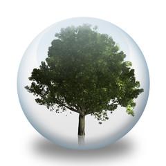 Arbre en bulle : chêne