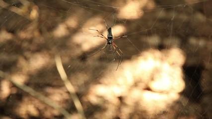 Spider in jungle