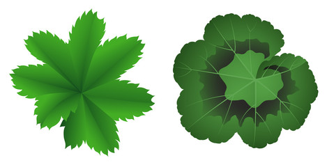 set of green leaves 4