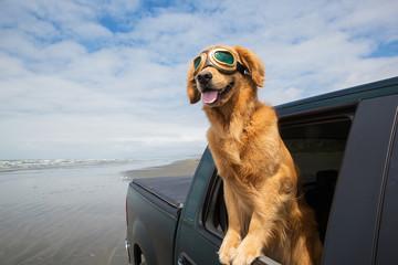 Pies podróż