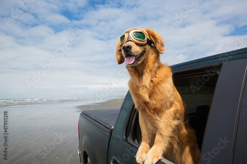 Fotobehang Hond Dog road trip