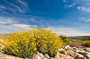 Spring in the Nevada desert