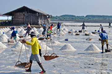 Workers in salt farming Thailand