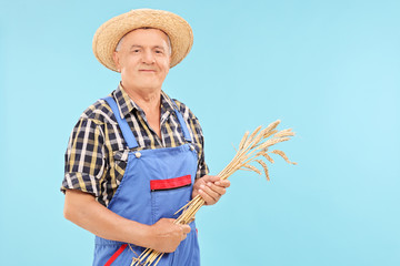 Mature farmer holding a bunch of wheat straws