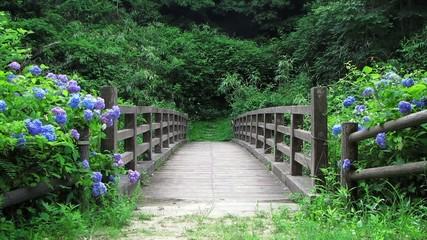 森の中の橋とアジサイ