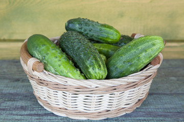 Harvest cucumbers and dill in a basket on the wooden background