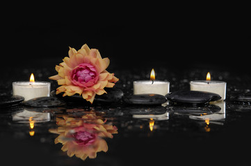 still life with black stone and ranunculus flower, candle
