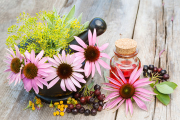 coneflowers in mortar and vial with essentia oil in garden