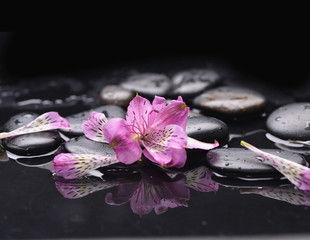 Set of beautiful orchid petals with black stones