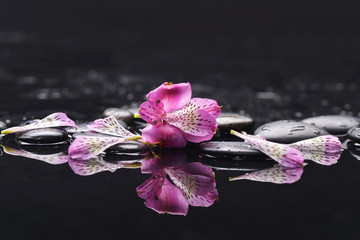 beautiful orchid petals with black stones
