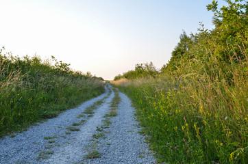 Gravel road at summer in lush vegetation