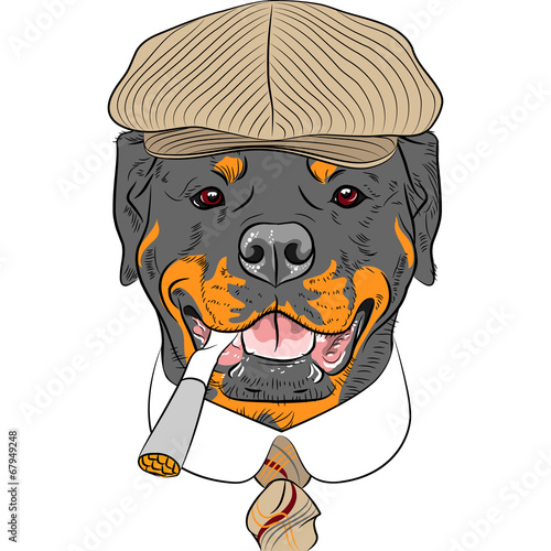 vector funny cartoon hipster dog Rottweiler - 67949248