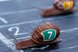 The winner snail crosses the finish line - 67952836