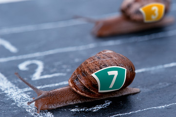 The winner snail crosses the finish line