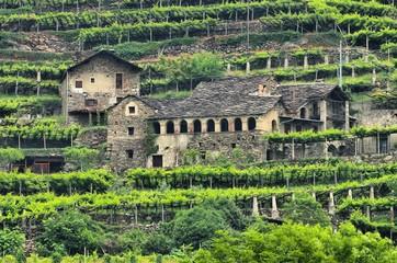 Aostatal Weinberg - Aostatal vineyard 01