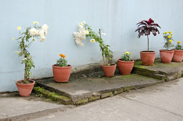 flowers and clay flowerpots on street