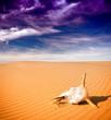 canvas print picture - Desert skull, Africa