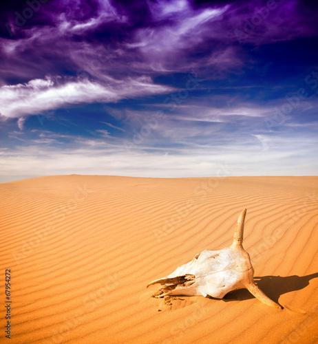 canvas print picture Desert skull, Africa