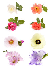 Spring flowers collage  , isolated on white background