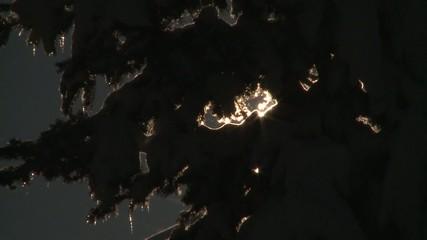 Soleil à travers arbre enneigé