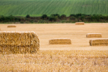 Close-up of hay bales and hedgerows