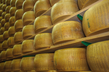 Wheels of parmesan cheese at dairy