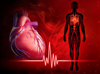 Human heart beat diagram