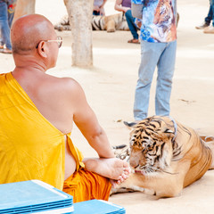 Buddhist monk with a Bengal tiger at the Tiger Templei, Thailand