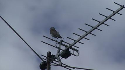 Bird on the antenna