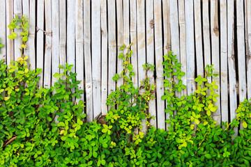 Green leaf border on bamboo panel background