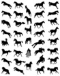 Black silhouettes of horses, vector