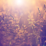 Fototapety Blurry vintage meadow