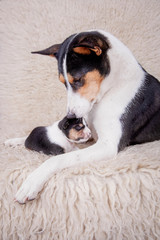 Newborn basenji puppy with mother