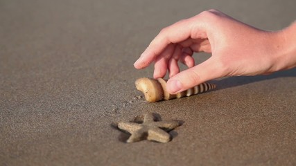 Starfish and shell in hand