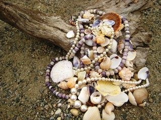 Seashells with Pearls, Driftwood on Beach