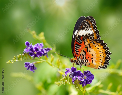 Deurstickers Vlinder Butterfly on a violet flower