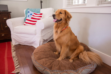 happy dog on a soft bed