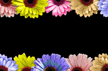 Frame made of colorful daisies isolated on Black