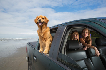 Dog drive with kids