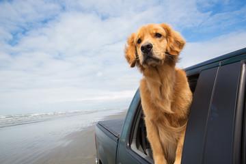 doggie drive
