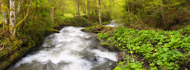 River in forest. Beautiful natural landscape