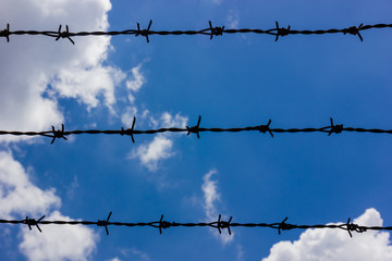 barbed on the sky.