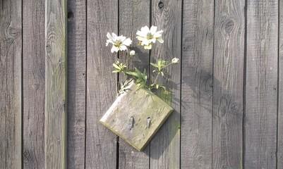Blumen an einem alten Holztor