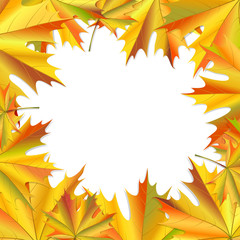 Frame of maple leaves.